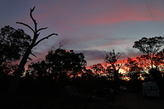 Tree and Clouds (blachswan) Tags: grampians grampiansnationalpark gariwerd gariwerdnationalpark victoriarange tree clouds sunset