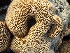 088/365: before it disappears (Michiko.Fujii) Tags: beach onthebeach naturalbeauty patterns patternsinnature exposedcoral