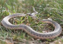 288: Snake #3