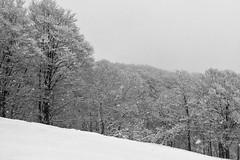 Side View (OzGFK) Tags: asia honshu japan cameraphone iphone6 travel myōkōshi niigataken jp myoko myokokogen akakuraonsen firtree treelined cloudy snow winter snowing snowsport blackandwhite monochrome