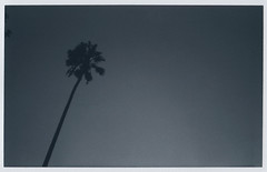 palm (LeandroF) Tags: palmtree instax instant wide fuji monochrome