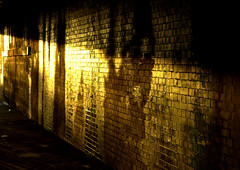 Glowing Preston wall (Tony Worrall) Tags: preston lancs lancashire city england regional region area northern uk update place location north visit county attraction open stream tour country welovethenorth nw northwest britain english british gb capture buy stock sell sale outside outdoors caught photo shoot shot picture captured sunny wall glow yellow sunlit bricks shine gold golden