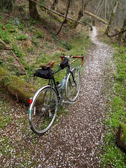 Hail Trail (RodoftheFlies) Tags: hornby island bc bicycle trail
