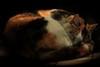 (Eugenio Albertus) Tags: gato pentacon 80d luznatural gata sueño