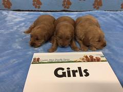 Dakota Girls 4-15
