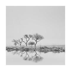 The inbetweener! (Nick green2012) Tags: dartmoor mist square blackandwhite silence minimal