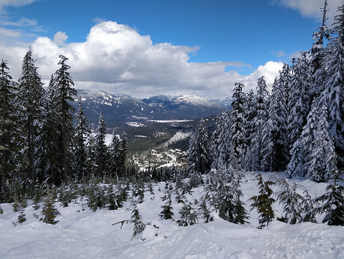 Whistler's Big Timber ski run is slowly returning to nature