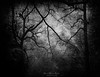 The forest (Mimadeo) Tags: scary dark fog forest fear horror mood monochrome landscape magic tree nightmare shadow light evening nature mystery mist spooky foggy darkness black misty halloween woods background creepy fantasy gothic mysterious silhouette branch white blackandwhite atmosphere trunk grungy copyspace textures grunge moody aged aging antique damaged dirty grain mess scratch textured