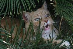 (Frascy) Tags: gatto gatti cat catz cats animal animals animali pets pet