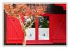 Les petits bateaux -  Small boats (diaph76) Tags: extérieur france gironde arbre tree fenêtres windows volets shutters rouge red rideaux curtains maisons houses