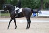_MG_8099 (dreiwn) Tags: dressage pferd reitturnier turnierreiten pferdesport horse horseback horseriding equestrian reitverein dressurprüfung kandare doublebridle reiten pferde reitplatz ridingarena dressur dressuur