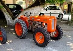 Fiat 241 R Frutteto (samestorici) Tags: trattoredepoca oldtimertraktor tractorfarmvintage tracteurantique trattoristorici oldtractor veicolostorico 241r