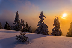 Sonnenaufgang Hornisgrinde (pack-your-suitcase photography) Tags: tannenbaum sunrise sonnenaufgang blackforest schwarzwald schnee himmel sky panorama ausblick weitwinkel baum