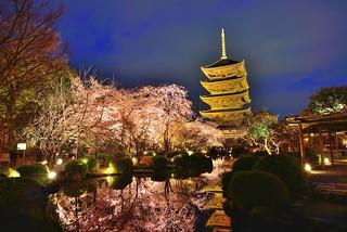 東寺夜櫻,京都 Kyoto, Japan