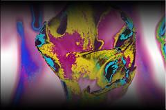 Transformado (seguicollar) Tags: tulipán tulips flor flower cara face rostro faz transformación color colorido imagencreativa photomanipulación art arte artecreativo artedigital virginiaseguí