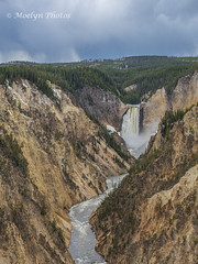 Grand Canyon of the Yellowstone River (moelynphotos) Tags: grandcanyonoftheyellowstone waterfall yellowstonenationalpark nature multicolored tree flowingwater yellowstoneriver nopeople wyoming moelynphotos