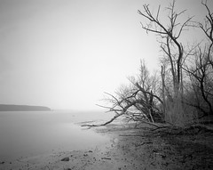 Hudson River (devb.) Tags: 4x5 largeformat linhoftechnika4 90mm ilfordfp4 rodinal esopus ny hudsonriver 150