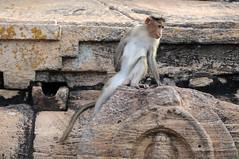 Upper Shivalaya à Badami, Inde (voyagesphotos) Tags: inde india karnataka badami temple religion hindouisme hindou hindu singe