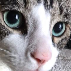 Close up (GaryAChurch123) Tags: speedlight flash pussycat blueeyes catmodel close fur 77d canonphotography canon feline tabby eyes face macro closeup cats cat