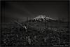 Makkari Nupuri... (SHADOWY HEAVEN) Tags: 1005157ha0106 羊蹄山 マッカリヌプリ tokyocameraclub igers igersjp phosjapan picsjp 日本 北海道 ファインダー越しの私の世界 写真好きな人と繋がりたい 写真撮ってる人と繋がりたい 写真の奏でる私の世界 モノクロ モノクローム モノクロ写真 白黒写真 空 山 風景写真 coregraphy japan hokkaido monochrome mono monotone blackandwhite bw bnw blackwhite noiretblanc japaninbw outdoor landscape paysage sky mountain weeds grass
