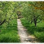 Spaziergang auf dem Klostergelände thumbnail