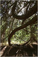raeren 3 (beauty of all things) Tags: belgien belgium hohesvenn raeren wald forest trees bäume