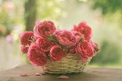 Pink roses (Inka56) Tags: 7dwf flora roses pinkrose pink basket basketwithroses stilllife woodtable bokeh bokehpainting oldlens manualfocus petals bouquet throughherlens
