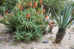 _DSC4853 (BasiaBM) Tags: botanical gardens rabat morocco