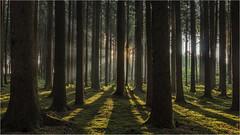 Waldimpression (Robbi Metz) Tags: deutschland germany landscape forest sunrise sun trees colors canoneos