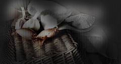 still life 2017 (Poli Maurizio) Tags: sony sonydsch200 disegno art abstract painting sculpture museum gallery virtual artist master famous canvas painter collection drawing impressionism naturalism renaissance expressionism naive realism baroque song sketch garden portrait autumn flower light nature sky smoke spring summer indoor travel water woman yellow blue black white color movement figure macro photo object wood fine unlimited still life fantasy fantastic outdoor clouds man barocco illustrazione schizzo watercolor technique surrealism 3dweddingpartyfamilytravelfriendsjapanvacationlondonbeachcaliforniabirthdaytripnycsummernatureitalyfrancemeparisartflowerssanfranciscoeuropechinaflowernewyorkwaterpeoplemusiccameraphone 3daustraliachristmasusaskygermanynewcanadanightcatholidayparkbwdogfoodsnowbabysunsetcitychicagospaintaiwanjulybluetokyoenglandmexicowinterportraitgreenred 3dpolimaurizioartworkredfunindiaarchitecturegardenmacrospringthailandukseattlefestivalconcertcanonhouseberlinhawaiistreetlakezoofloridajunemaywhitevancouverkidstreecloudstorontobarcelonageotaggedhome 3dbwbwdigitalseadaytexasscotlandcarlighthalloweencampingchurchanimalstreeswashingtonrivernikonaprilbostongirlirelandgraffitiamsterdamrocklandscapeblackandwhitecatsnewyorkcitysanromeroadtripurbanhoneymoonocean 3dwatercolorsnewzealandmarchblackmuseumyorkhikingislandmountainsyellowsydneysunhongkongshowgraduationcolorfilmmountainanimallosangelesschoolmoblogphotodogs 3dartdesigndisegnosiciliacalabriabasilicatacampaniamarcheabruzzomoliselaziotoscanaemiliaromagnalombardiavenetofriuliveneziagiuliapiemontevalledaostaliguriatrentinoaltoadigepuglia 3dlandscapepaesaggiolunasolemarenuvolecittàtramontoalbamontagnecollinenebbialuceautomobilearredamentointerniesterninaturamortacieloragazzadonnauomobambinofruttabarca 3dcanigattirinascimentomodelbarocconaturalismomattepaintingfuturismoastrattismocubismosurrealismorealismoiperealismoclassicismorococomanierismoromanticismoimpressionismogiocovirtualepescefishlightnightda