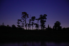 Standing Tall (Arranion) Tags: canon eos 5d2 2880mm trees blue hour forest reflection night long exposure wood nature outdoor beauty