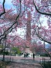 Cleopatra's Needle (Stanley Zimny (Thank You for 30 Million views)) Tags: centralpark newyork nyc ny people obelisk cleopatra'sneedle pink flowers spring seasons