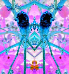 Colourful Version (Lindsaywhimsy) Tags: abstract colourful pink blue experimental