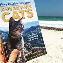 Revising for my future cat (rjmiller1807) Tags: cat kitty kitten adventurecat 2018 january beach sea ocean sand book outdoorcatclub iphone iphonese iphonography reading read blouberg bloubergstrand blaauwberg blaauwbergstrand capetown westerncape southafrica