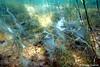 Unterwasserlandschaft (MarTou72) Tags: marceltourmo sonydscrx100m5 cybershot tier pflanze tauchen unterwasser see flus werbellinsee makro