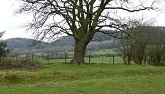 Tree in a Landscape. (jenichesney57) Tags: tree landscape hills malvern castlemorton lone green view shribd grass panasoniclumix fence wire