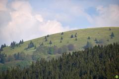 At the Donovaly pass (petrOlly) Tags: europe europa slovensko slowakei slovakia słowacja sk2018 mountain mountains nature natura przyroda landscape