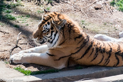 180323 National Zoological Park-09.jpg (Bruce Batten) Tags: locations terrestrial plants trips occasions zoos subjects mammals nationalzoologicalpark animals vertebrates businessresearchtrips washingtondc usa washington districtofcolumbia unitedstates us