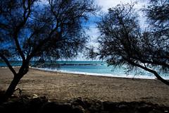 A la sombra (candi...) Tags: playa arboles cielo nubes sombra arena agua naturaleza nature airelibre sonya77