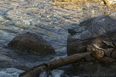 """American Dipper • <a style=""""font-size:0.8em;"""" href=""""http://www.flickr.com/photos/63501323@N07/26425070437/"""" target=""""_blank"""">View on Flickr</a>"""