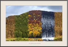 Four Seasons (2015/2016) II. (Dieter Meyer) Tags: beuren schwäbischealb badenwürttemberg deutschland germany jahreszeiten seasons fourseasons berge natur mountains nature collage bäume
