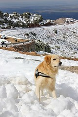 Peña de Francia (Edu Coquer) Tags: montaña paisajes landscapes trekking senderismo perros animales golden goldenretriever animals pets dogs