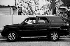 20180414-_RAG8976 (bigbuddy1988) Tags: portrait photography bw art usa car dog pet funny city street nikon d800 newyork white black friend