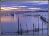 Paseando por Valencia (edomingo) Tags: edomingo olympusepl3 mzuiko1442 valencia albufera mar