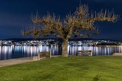 Thalwil Zürichsee (m_blank) Tags: tree night dark nightshot a7 a7iii ilce7m3 alpha7 sony sonyalpha gm gmaster 2470gm28 lake nachtaufnahme stativ