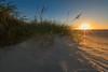 Caught in Rays (Scoutchuck) Tags: grass usa blinding sunrise waningmoon serene goldenhour water nps surf ocracoke canon fall starburst shore rays sun flare beach ocean nationalparkservice ef1635mmf28liiusm scenic coastal f16 northcarolina green eos6dmarkii smallaperature atlantic glare unitedstates us