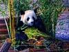 Adorable Panda at Berlin Zoo  - EXPLORE (Amberinsea Photography) Tags: berlinzoo amberinseaphotography zoo sweet adorable cute funny garden germany voyage travel trip visit sightseeing amazing nounours explore explored
