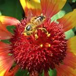 Pollen Legs thumbnail