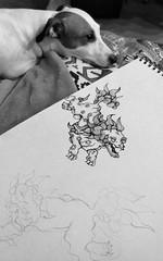 Белка лежит рядом с курсовой работой (sava-vava) Tags: lj dogs dog animals pet photo животные собаки домашние любимцы mobilephoto 2017 art арт design дизайн bw sr