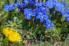 131-DSC_0096.jpg (stephan bc) Tags: bloem pyreneeën reis